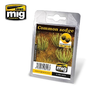 CG8456 COMMON SEDGE - 18개 포함